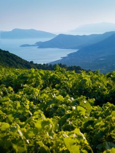 Samos-vineyards-vertical